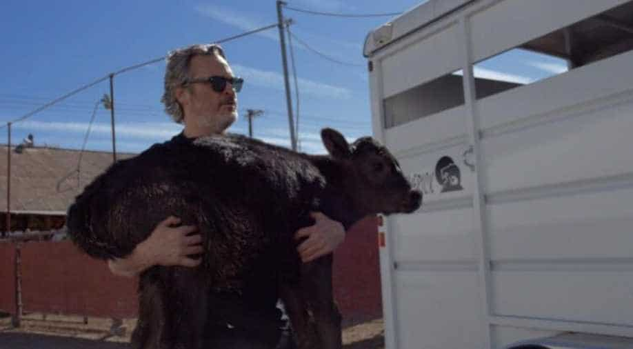 Footage Shows Joaquin Phoenix Rescuing Cow And Calf From Slaughterhouse