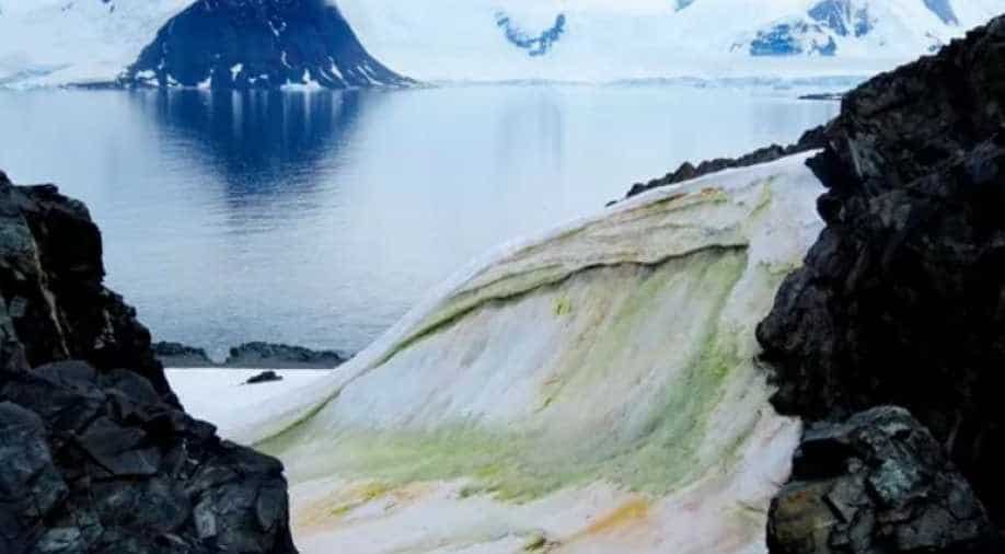 The climate crisis is turning parts of Antarctica green