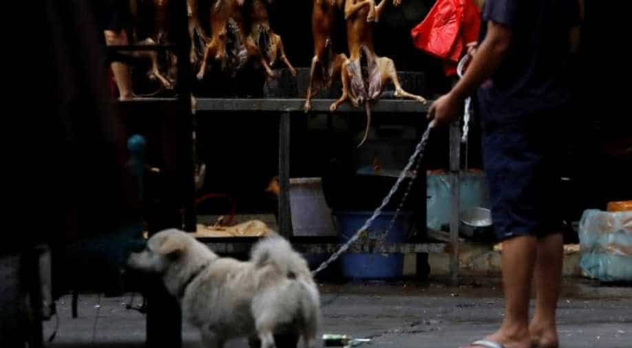 China's controversial dog meat festival goes ahead but virus takes a toll