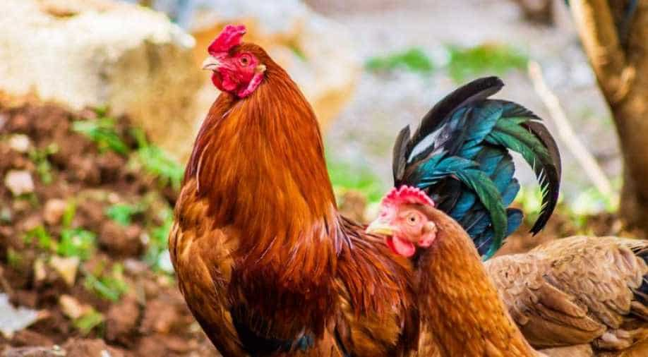 Imported Chicken Wings Test Positive for COVID-19