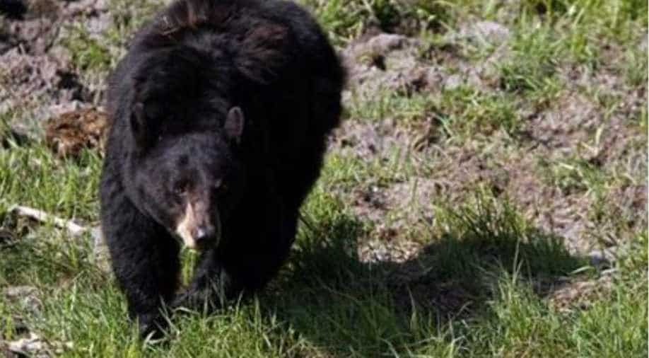 Bears maul zookeeper in front of visitors