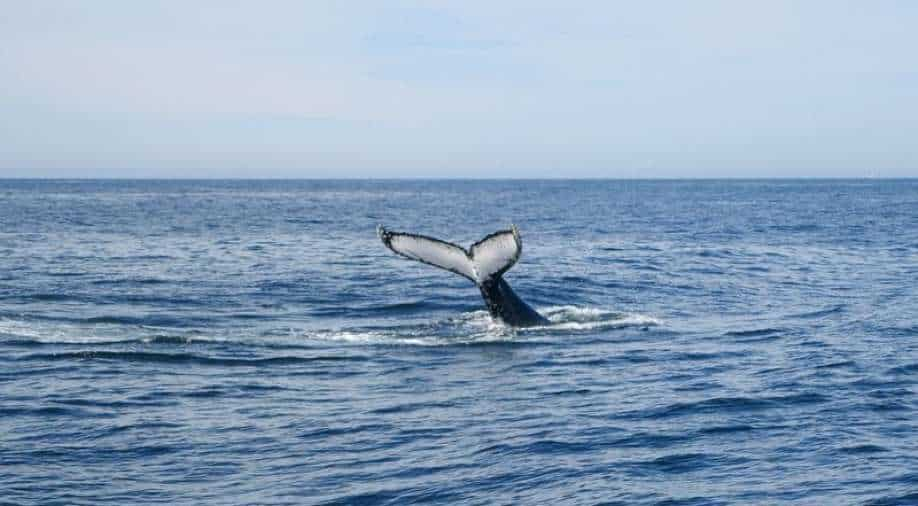Researchers think they spotted new whale species off Mexico By