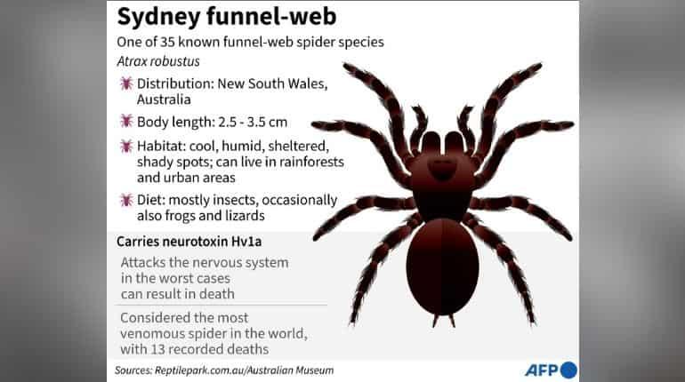 هشدار عنکبوت