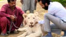 Pakistani elite's love for big cats makes animal trade a roaring business
