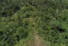 An aerial view shows wild elephants walking in forest