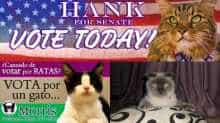 World Cats Day: Cats who ran for elections