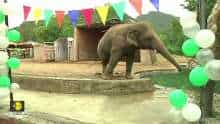 Pakistan's lonely elephant set for new life with herd in Cambodia